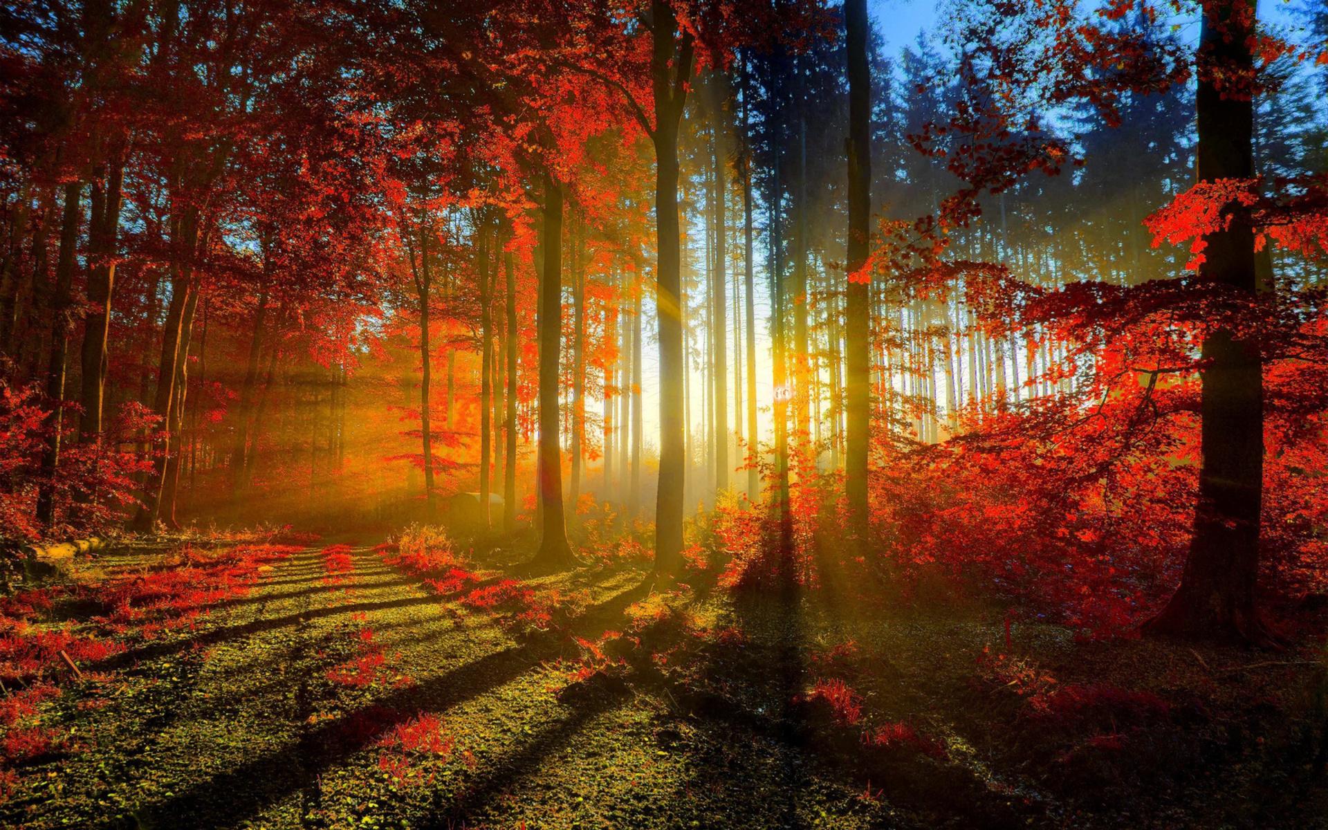 Картинка Утро в осеннем лесу » Осень » Природа » Картинки ...
