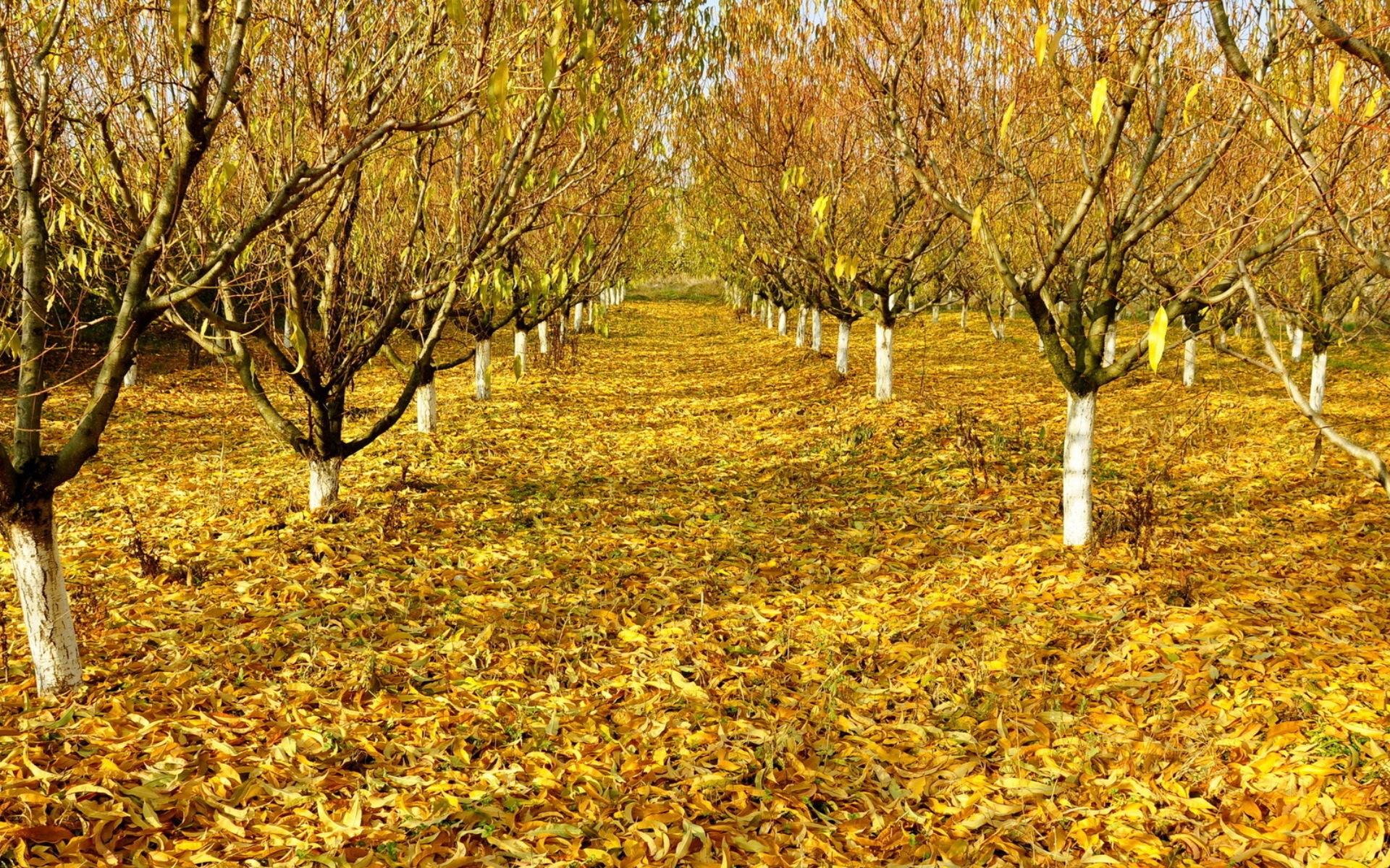 Картинка Осень в саду » Осень » Природа » Картинки 24 ...
