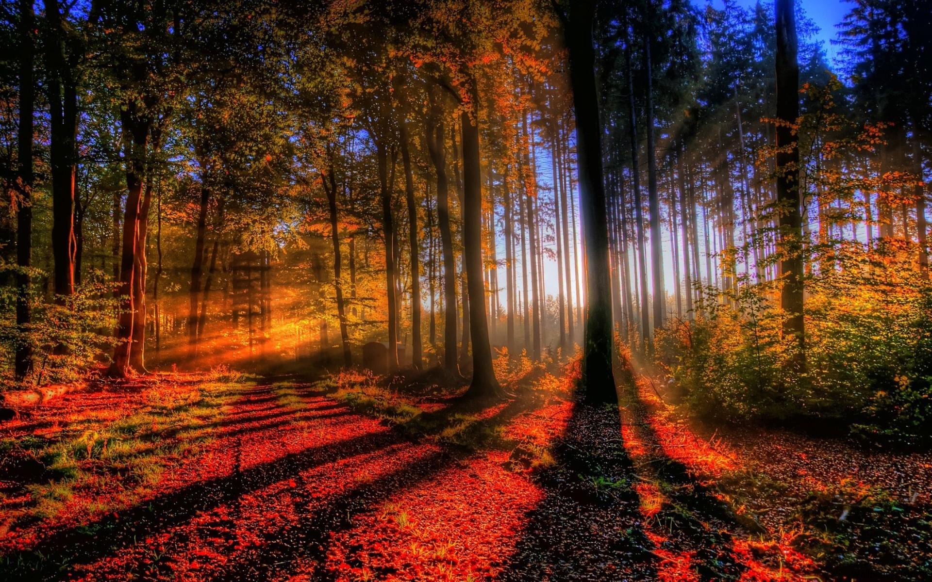 Картинка Лучи солнца в осееннем лесу » Осень » Природа ...