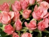 http://www.kartinki24.ru/uploads/gallery/thumb/36/kartinki24_flowers_0204.jpg